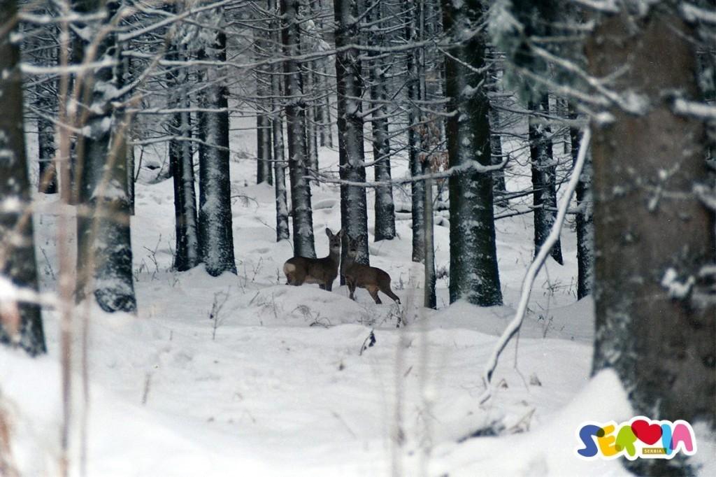 wintersport in Servië